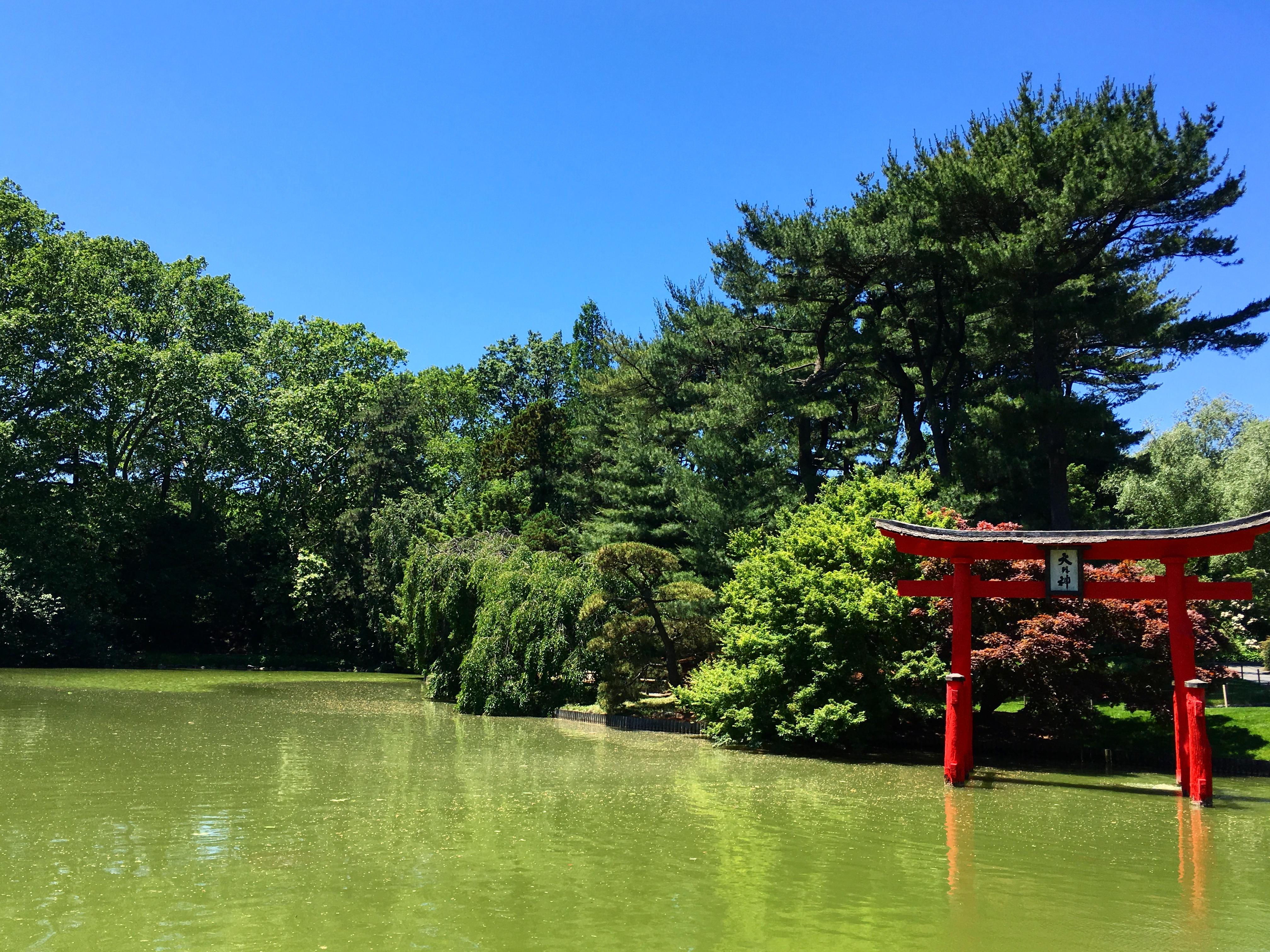 japanese-pond
